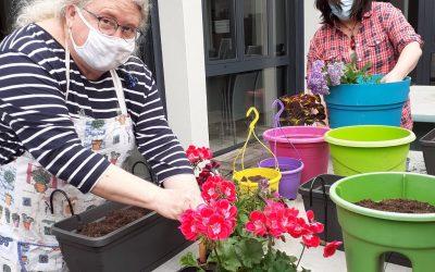 Atelier botanique – Fleurissement de la terrasse du GEM
